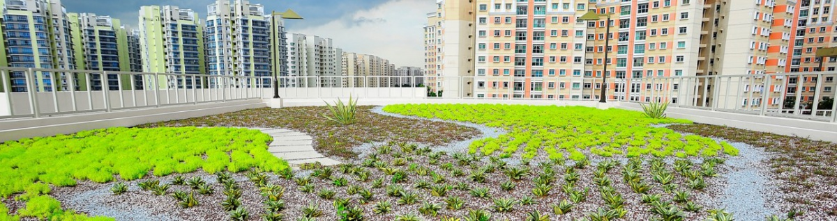 Dach zielony – Ravagreen